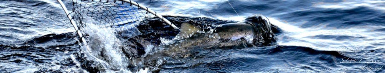 Bergeforsfisket